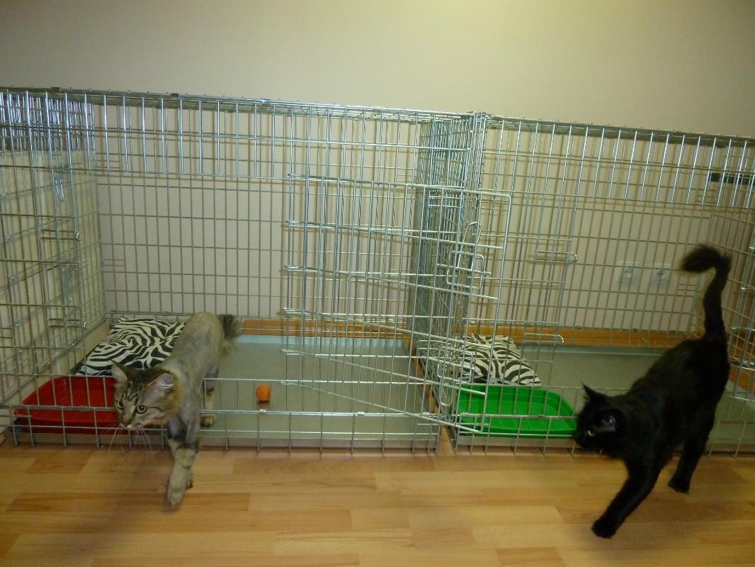Гостиница для животных котов