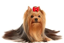 Салон красоты для животных: стрижка животных и другие косметологические услуги для животных находится в Киеве на левом берегу (дарницкий район)