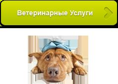 Услуги ветеринара в любое время суток